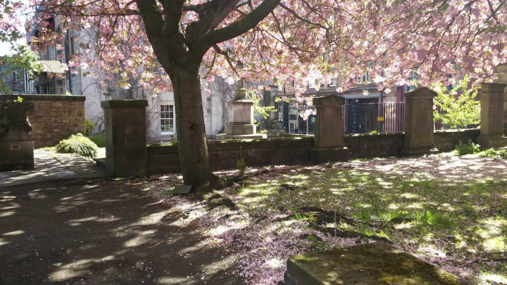 A tree of pink blossom sheds its petals over the lawn and the mellow stone headstones in the sun.