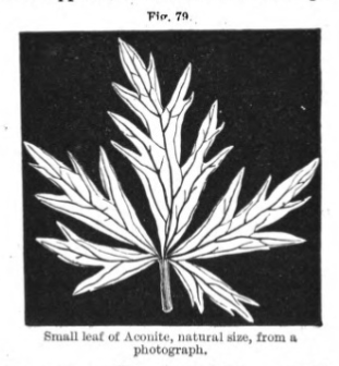 A leaf, white on a black background.